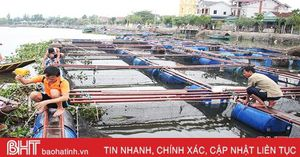 Người nuôi trồng thủy sản Hà Tĩnh giằng néo lồng bè, gia cố bờ 'đón' bão