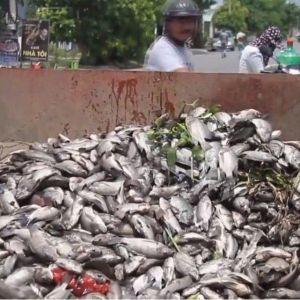 Đà Nẵng: Cá chết trắng hồ Hòa Phú, người dân đóng cửa trốn trong nhà