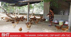 Về xã miền biển Hà Tĩnh mua gà 'chạy bộ'