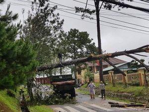 Lâm Đồng: Mưa lớn làm đổ cây, quốc lộ bị chia cắt