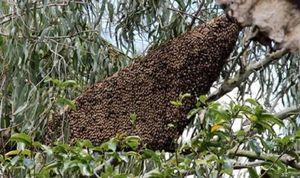 Bị ong đốt khi đi lấy củi, người đàn ông tử vong