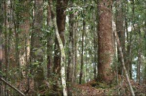 2 đối tượng khai thác gỗ quý hiếm bị xử phạt hơn 100 triệu đồng