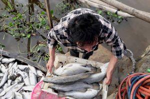 Cơ quan chức năng nói gì về hiện tượng cá nuôi lồng bè chết ở Hà Tĩnh
