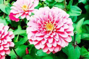 Lời của hoa...