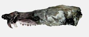 Kinh ngạc hóa thạch lớp Thú giống loài sóc trong 'Kỷ băng hà'