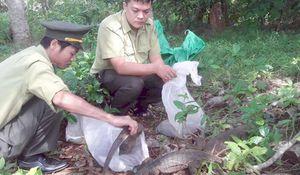 Quyết liệt bảo vệ động vật hoang dã quý hiếm