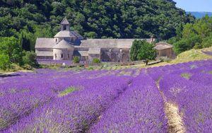 Lạc giữa sắc tím mộng mơ của cánh đồng oải hương lớn nhất nước Pháp