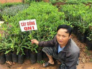 Vườn ươm cây giống mắc ca tin cậy ở Đắk Lắk