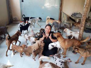 'Dành cả thanh xuân' và tiền bạc để cứu hộ chó mèo