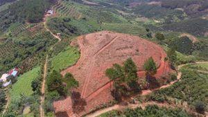 Lâm Đồng: Quản lý bảo vệ rừng không nương nhẹ, không có vùng cấm