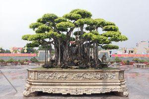 Mạnh tay chi tới 460 tỷ đồng, khách Nhật vẫn không mua nổi 'siêu cây'