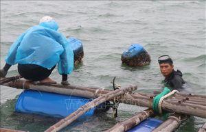 Ứng phó với bão số 5: Người dân Phú Yên gia cố lồng, bè nuôi trồng thủy sản
