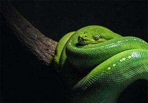 Cho rắn ăn không đeo bao tay, cậu bé gặp họa kinh dị