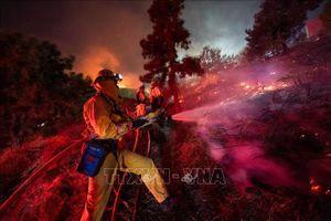 Tổng thống Mỹ và Thống đốc California 'khẩu chiến' về cháy rừng
