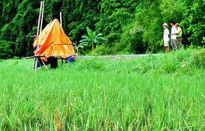 Ninh Hải: Mô hình nuôi trồng xen canh cho giá trị kinh tế cao