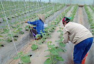 Phú Thọ: Vượt khó vươn lên đạt chuẩn nông thôn mới