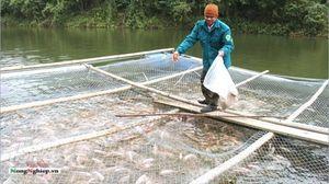 Đột phá nuôi cá ở huyện vùng cao Chợ Mới
