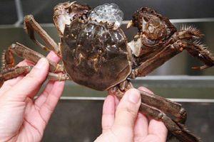 Hồ nuôi cua lông Trung Quốc bị đầu độc vì du khách kỷ lục