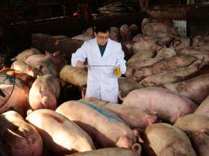 Trung Quốc tìm giải pháp bình ổn giá thịt lợn