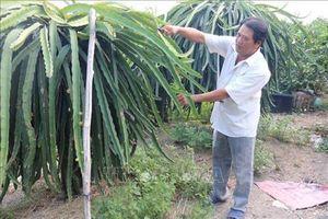 Tiền Giang: Chuyên canh cây ăn quả có lợi thế ở vùng thuần nông