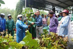 Tặng 5.000 cây vả giống cho người dân huyện Phú Lộc