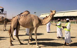 Bảo tồn di sản thông qua lễ hội Al Dhafra