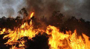 Cháy hàng trăm ha rừng tại Bắc Giang