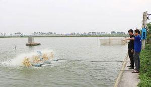 Nuôi trồng thủy sản: Thiếu liên kết, khó phát triển