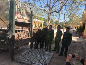 Hiểm họa thịt heo nhập lậu vào Việt Nam