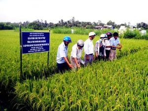 Năm 2019 – Nông nghiệp chủ động đương đầu biến đổi khí hậu