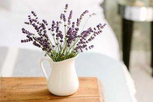 Những loại cây hoa vừa giúp ngủ ngon, vừa lọc sạch không khí ô nhiễm