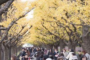 Ngắm cảnh mùa Thu đẹp như tranh vẽ ở thủ đô Tokyo