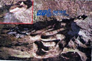 Những bộ xương bí ẩn và rắn có mào ở Tràng An (Phần 3)