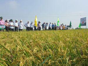 Nông nghiệp Hà Nội: Mở hướng đi mới cho xuất khẩu gạo