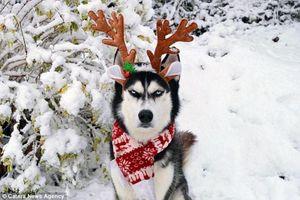 Sức hút 'khủng' của chú chó 'giận dữ' nổi tiếng thế giới