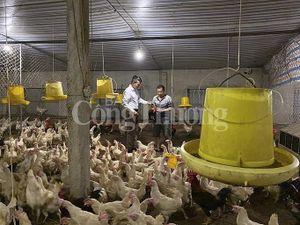 Nghệ An: Giá lợn tăng cao, tiểu thương 'nghỉ chợ'