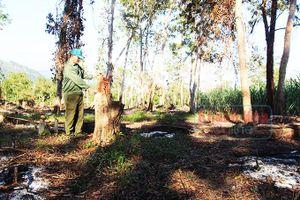 Kỳ 2: Giải pháp nào để giữ rừng