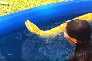 Rùng mình xem bé gái bơi cùng trăn khổng lồ