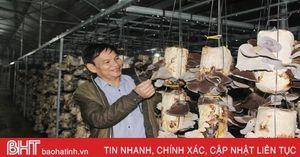 Các cơ sở sản xuất phôi nấm Hà Tĩnh 'cháy' hàng mùa tết