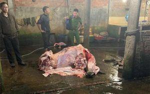 Bắt quả tang 3 lò mổ ở Quảng Nam bơm nước vào bụng bò để tăng trọng