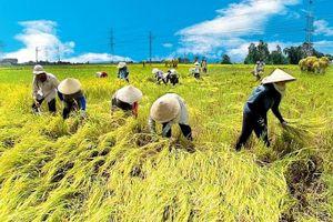 Lỏng lẻo trong mối liên kết doanh nghiệp nông nghiệp