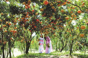 Các điều kiện phát triển du lịch sinh thái miệt vườn tại thành phố Cần Thơ