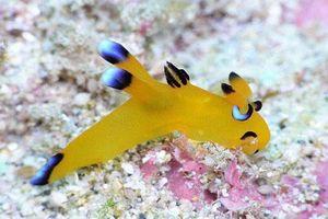 Ly kỳ câu chuyện về sinh vật giống hệt Pikachu