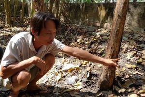 Vụ 9 bộ hài cốt ở Tây Ninh: Bác dâu vứt 2 sọ người xuống ao nhà cháu