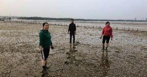 Huyện Tĩnh Gia, Thanh Hóa: Hàng chục hecta ngao chết trắng ngày cận Tết