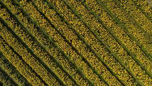 Làng hoa xứ Huế ngập tràn sắc màu Tết