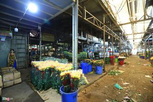 Không khí tất bật đón hoa Tết về ở chợ sỉ lớn nhất TP.HCM