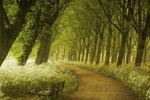 Những con đường huyền diệu thôi thúc đôi chân muốn đi của bạn