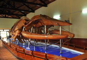 Đến 'bảo tàng' xương cá ông lớn nhất Việt Nam, chiêm ngưỡng bộ cốt cá ông lớn nhất Đông Nam Á