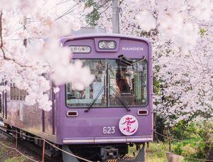 Hoa anh đào nở rợp trời Nhật Bản mùa xuân